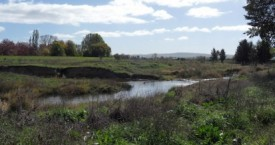 Restoring Native Vegetation along the Macquarie River.
