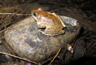 Booroolong Frog Monitoring Project – Bathurst Regional Council.